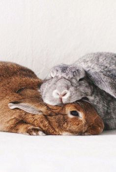 Bunny Pals just napping. Funny Bunnies, Cute Bunny, Bunny Rabbit, Cute Baby Animals, Animals And Pets, Beautiful Creatures, Animals Beautiful, Animal Pictures, Cute Pictures