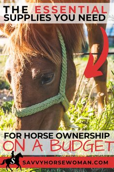 With so many horse supplies out there on the market, it's hard to know what supplies are absolutely needed and which aren't when buying your first horse.