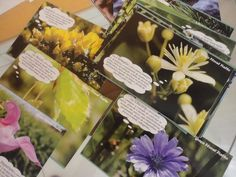 florais de bach conjunto 40 cartas cards cartões tam. 10x15