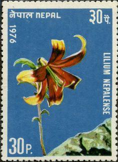 Lilium Nepalense NEPAL 07/11/1976