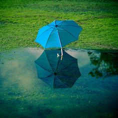 Unbelieveable shot of umbrella