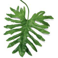 9. Choose Large-leafed Plants - 10 Ways to Create a Backyard Oasis - Coastal Living