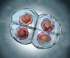 For the first time, an international team of scientists has mapped all the genes that are activated in the first few days of a fertilized human egg.