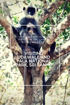 Abundance of wildlife in Yala and Udawalahe National Park, Sri Lanka