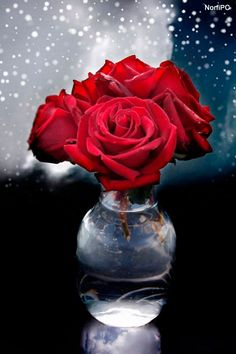 Imagen de amor para usar como fondo de pantalla en el celular
