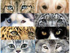 Animal Eyes, Drawing by Nicole Zeug, www.arts-and-dogs.de