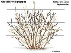 10 meilleures images du tableau arbre fruitier fruit trees plant cuttings et fruit garden. Black Bedroom Furniture Sets. Home Design Ideas