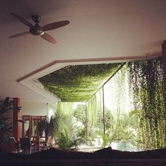 Happy Hanging House Plants