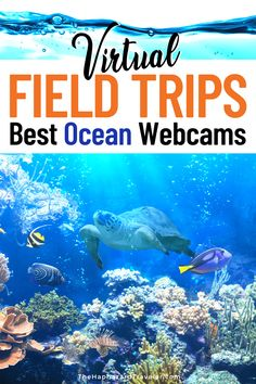 Looking for virtual field trips and adventures from home? Take a virtual tour with these aquarium webcams & ocean live feeds! These are the best virtual field trips for kids & homeschooling. See jellyfish & sea otters at the Monterey Bay Aquarium, penguins at the Aquarium of the Pacific, manatees & corals in Florida, a kelp forest in the Channel Islands of California, Beluga whales in Manitoba, whale sharks in the Georgia Aquarium & more! #onlinelearning #homeschool #homeschoolactivities Virtual Museum Tours, Virtual Tour, Travel Advice, Travel Guides, Travel Tips, Travel With Kids, Family Travel, Middle School Science, Kid Science