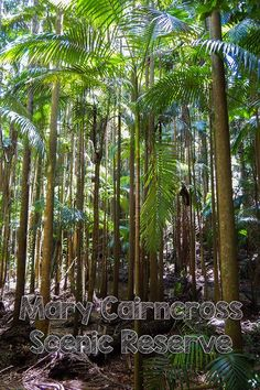 Explore the Mary Cairncross Scenic Reserve on the Sunshine Coast Hinterland, Australia Cool Places To Visit, Places To Travel, Australia Landscape, Travel Info, Travel Tips, New Zealand Travel, Sunshine Coast, Australia Travel, Beautiful Beaches