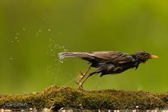 Blog.fredericsiffert.com: Another birds