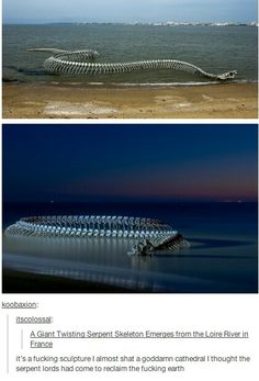 And I thought it was a basilisk skeleton washing up on to shore