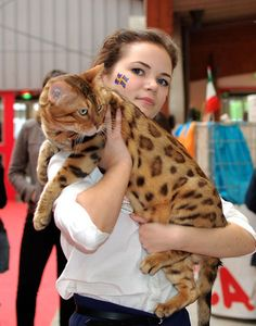 9 kg (almost 20lbs) of Bengal cat. I've ALWAYS wanted a Bengal. I WILL have one one day.