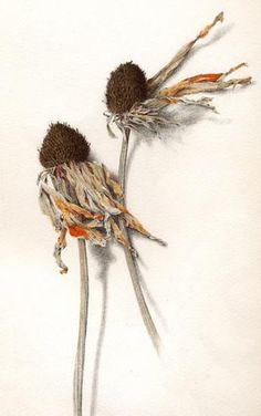John Gist | American Society of Botanical Artists