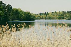 Imagem de forest, lake, and nature