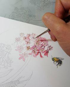 Milkweed & a little #bumblebee for @pollinatorpartnership  #botanicalartist #botanical #botanicalart #flowers #bees #insectart #pollinators