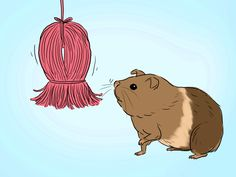 How to Make a Dangling Guinea Pig Toy -- via wikiHow.com