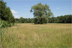 Réserve naturelle du Ried d'Herbsheim - #Alsace