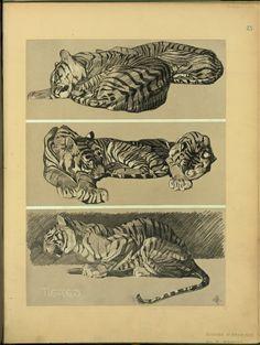 Tigres - ID: 102347 - NYPL Digital Gallery