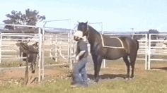 saddle pad - Horses Funny - Funny Horse Meme - - saddle pad The post saddle pad appeared first on Gag Dad. Cute Small Animals, Animals And Pets, Funny Animals, Funny Horse Videos, Funny Horses, Most Beautiful Animals, Beautiful Horses, Horse Meme, Horse Humor