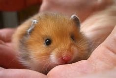 Image result for unique Hamsters