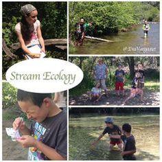 Field, Forest, & Stream: Stream Ecology - Eva Varga
