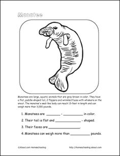 Manatee Coloring Page coloring