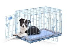 Precision Pet SnooZZy 30 by 19 by 21-Inch 2-Door Baby Crate, Size 3000, Blue * Check this awesome image  : Dog cages