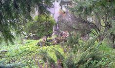 Miniatura Tarnowa #geocaching