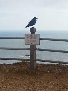 Bird on watch :) Pointe Vicente, CA https://www.facebook.com/michelledennisrealtor