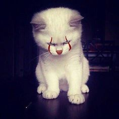 CATwise : #Pennywise