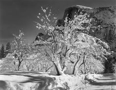 Half Dome, Apple Orchard by Ansel Adams