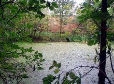 Naturalny zbiornik wodny w parku podworskim w Listomiu