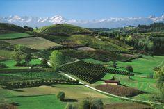 Verdi alberi campi e vigneti sulle colline del Monferrato con le Alpi sullo sfondo.