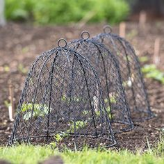 Garden Hacks: 10 Ideas for Wire Cloches - Gardenista Vegetable Garden Tips, Veg Garden, Garden Tools, Potager Garden, Garden Shop, Garden Cloche, Garden Terrarium, Garden Crafts, Outdoor Plants