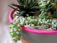 Neon-painted rims really set off these succulents - love this  #DIY #craft #garden