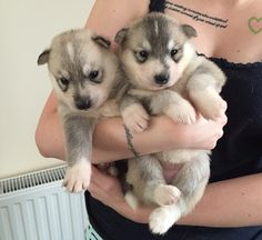 Cute little bundles of fur