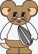 Hamster Activity
