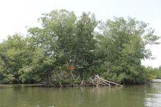 Este ecosistema estratégico alberga una gran biodiversidad y endemismos de especies, en el cual se reportan 768, dividas entre aves, mamíferos, reptiles, peces, moluscos y anfibios.