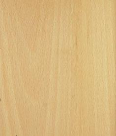 Hêtre blanc  - Fagus sylvatica