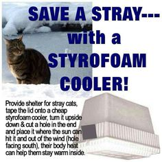 Save a stray cat in winter with styrofoam