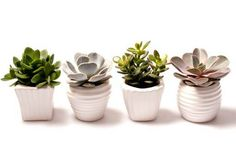 Mini Succulent Vase Set - Succulent collection - Super Easy Care Present - Ideal for use on windowsills, shelves and desks - Bold Punch and Retro - Gift suitable for any occasion. Succulent Gifts, Window Sill, Planter Pots, Succulents, Room Decor, Retro, Decor Ideas, Window Frames, Succulent Plants