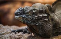 lizard by Detlef Knapp on 500px