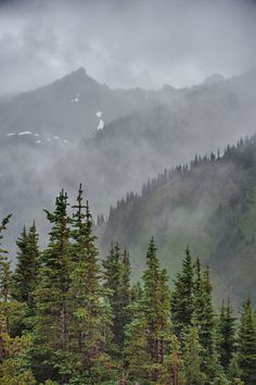 Misty View | by .Bala