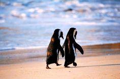 Cartoon penguins holding hands - photo#54