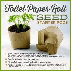 Toilet paper roll seed pod