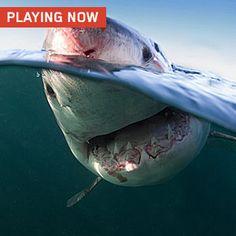 Shark Cams: Sharkageddon Cam.