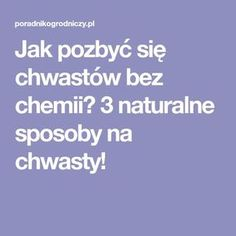 Jak pozbyć się chwastów bez chemii? 3 naturalne sposoby na chwasty! Vegetable Garden, Sweet Home, Lawn And Garden, House Beautiful, Veggie Gardens, Vegetable Gardening, Vegetables Garden, Edible Garden