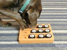 Review: Our Pets Sushi Puzzle Dog Toy Best Treats For Dogs, Healthy Dog Treats, Top Dog Food Brands, Top Dog Foods, Prescription Dog Food, Worms In Dogs, Pregnant Dog, Sweet Potatoes For Dogs, Wet Dog Food