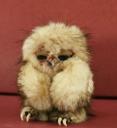 This little guy looks like a character that's be on 'The Labyrinth' with David Bowie lol... or 'Gremlins' lol too funny!